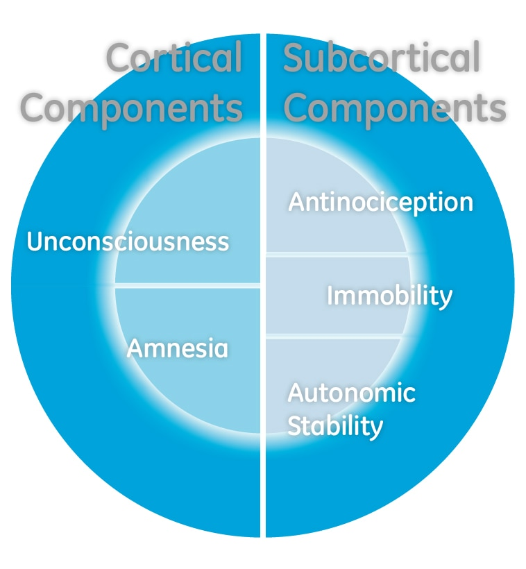 adequacy of anaesthesia cortical and subcortical components.